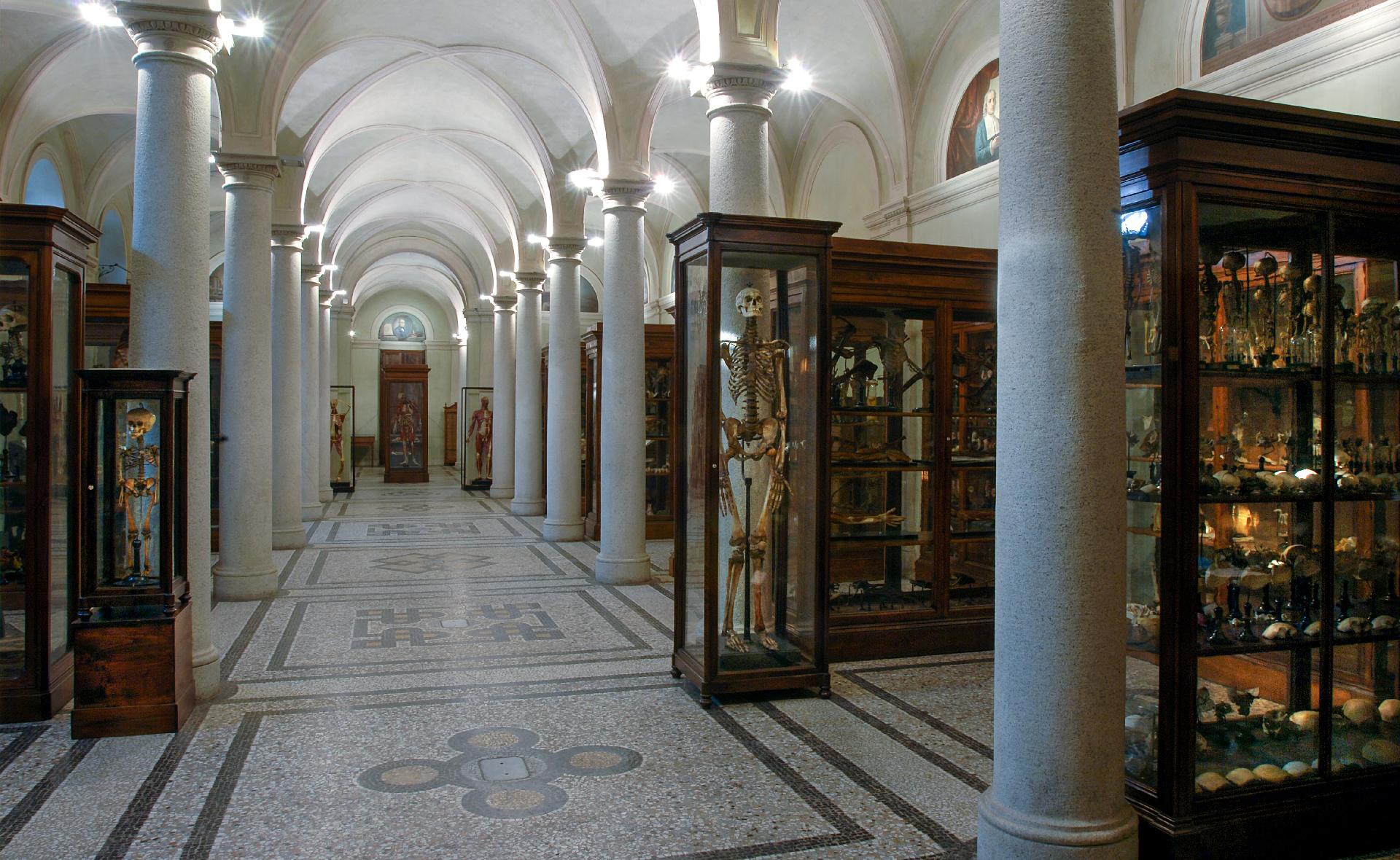 Polo Museale del Palazzo degli Istituti Anatomici